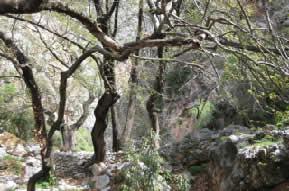 Entrance to Kastellian Spring