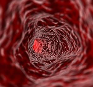 inside a vein